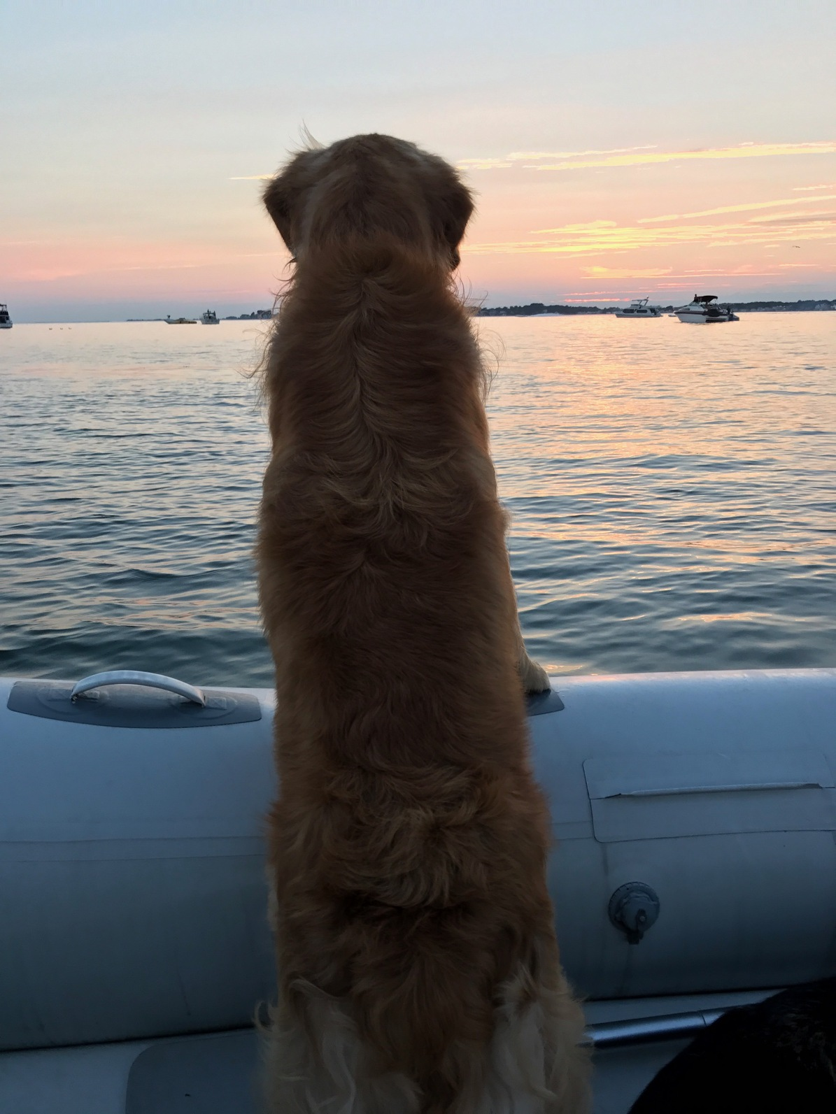 Cooper (Shire x Reese) enjoying the view from his boat