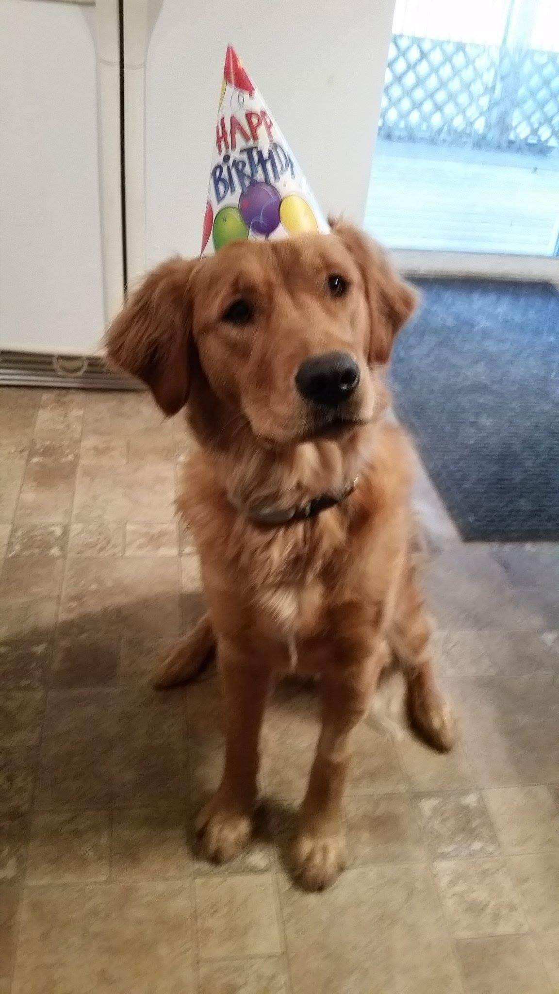 Ghillie (Shire x Jack) 1st birthday party