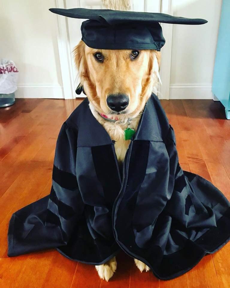 Shea (Shire x Jack) puppy graduation