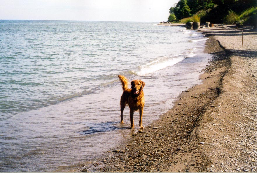 Bliss (Breeze x Kai) enjoying Lake Erie